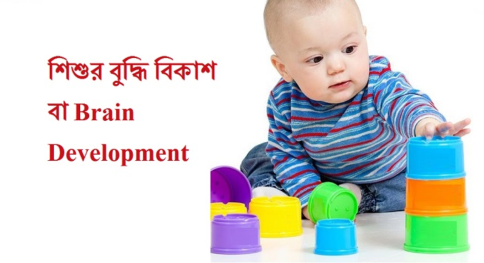 শিশুর বুদ্ধি বিকাশ বা Brain Development